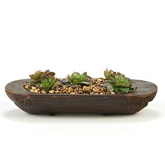 Echeveria in Oval Planter