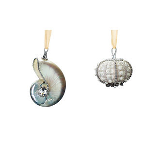 Sea Urchin and Nautilus Shell Ornaments, Set of Two