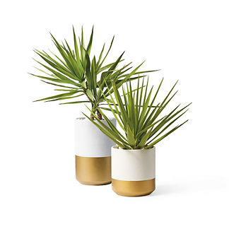 Rylan Planter