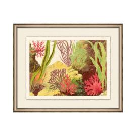 Coral Reef I