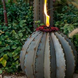 Ferocactus Torch