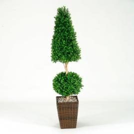 Ball and Cone Boxwood Topiary
