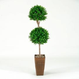 Double Boxwood Topiary