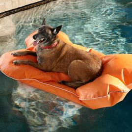 Aqua Pup Pool Float