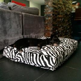 Animals Matter® Pet Floor Pillow