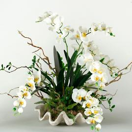 Cream Orchids in Clam Shell