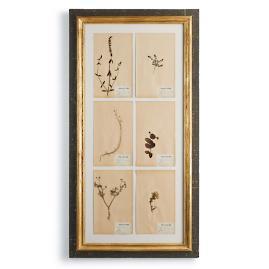 French Framed Botanicals
