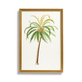 Coconut Tree Print from the New York Botanical