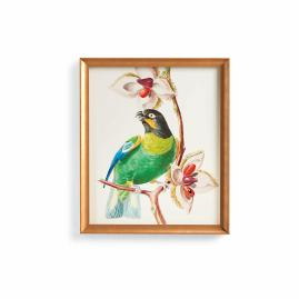 Caica Parrot Print from the New York Botanical