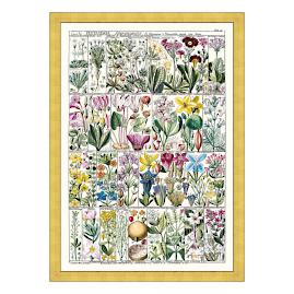 Pentrandia Florals Print from the New York Botanical