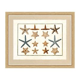 Starfish I Print from the New York Botanical