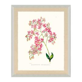 Bateman Orchid III Print from the New York