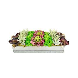 Sadie Succulent Garden
