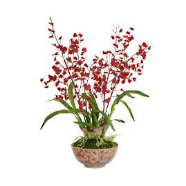 Orchid in Ceramic Bowl