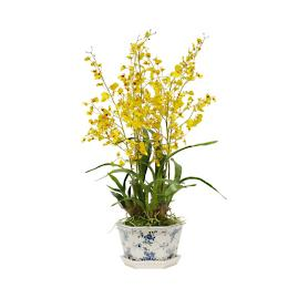 Oncidium in Rose Pot