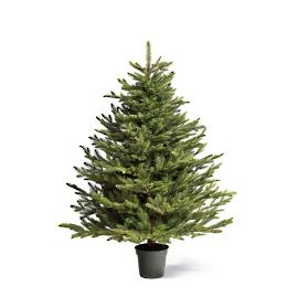 Grand Noble Tabletop Artificial Unlit Christmas Tree