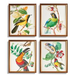 Birds of Paradise Collection from the New York