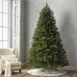Balsam Fir 10' Full Profile Tree