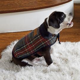 Pendleton Dog Coat