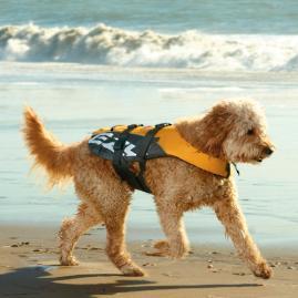 Dog Flotation Device
