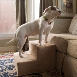 Animals Matter ® Lightweight Portable Pet Steps