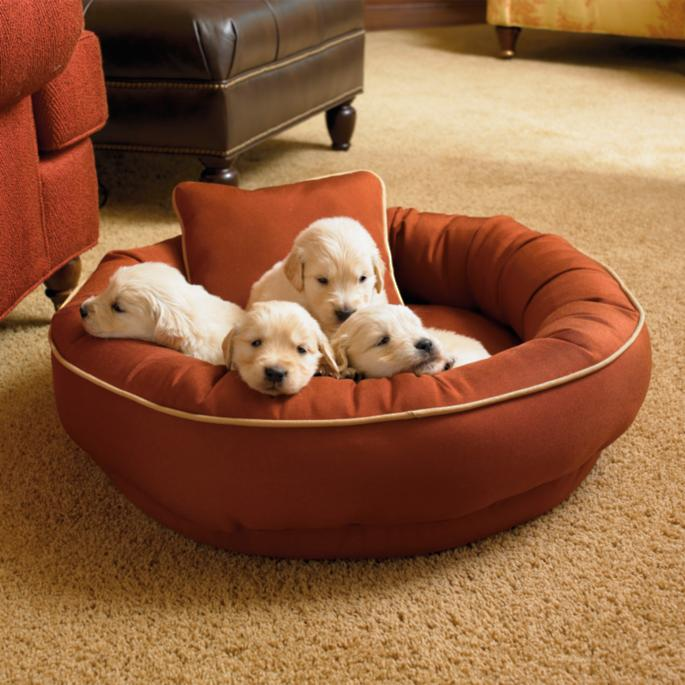 Dog Chewed Up Rug: Chew-resistant Cordura Pet Bed