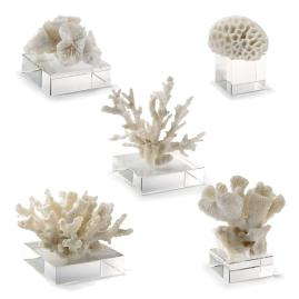 Corals on Risers, Set of Five