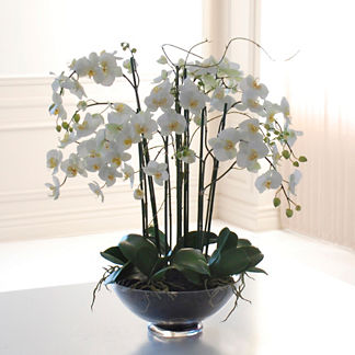 Phalaenopsis Orchid in Glass Bowl