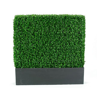 Outdoor Boxwood Hedge