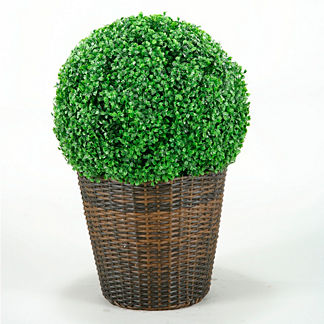 Outdoor Boxwood Ball in Round Basket