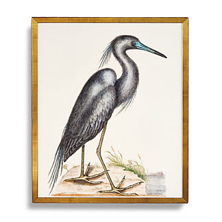 Blue Heron Print from the New York Botanical Garden Archives