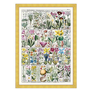 Pentrandia Florals Print from the New York Botanical Garden Archives
