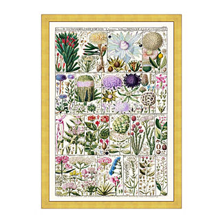 Tetrandria Florals Print from the New York Botanical Garden Archives