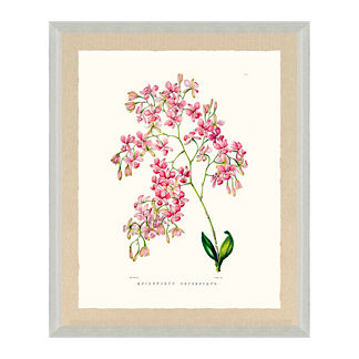 Bateman Orchid Giclee Print III from the New York Botanical Garden Archives