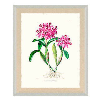 Bateman Orchid Giclee Print IV from the New York Botanical Garden Archives