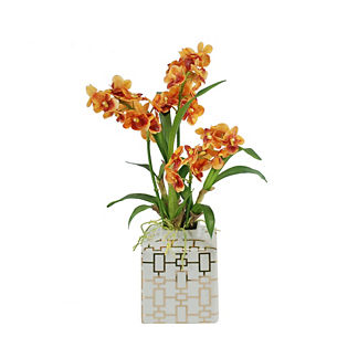 Vanda Orchid in Planter