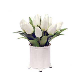 Tulip in Canister Vase