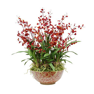 Oncidium Orchid in Ceramic Bowl