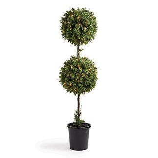 5' Boxwood Double Ball Topiary