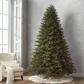 Grand Fraser 10' Full Profile Tree