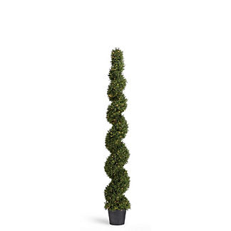 Outdoor Spiral Rosemary Topiary