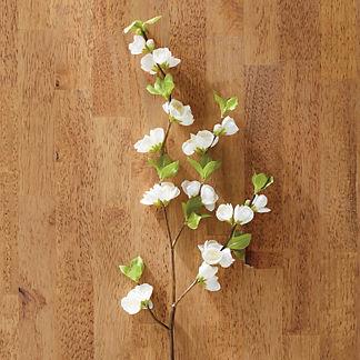 Quince Blossom Stem