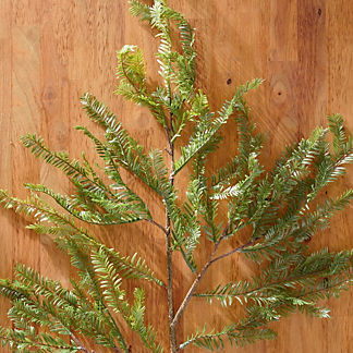 Soft Pine Spray, Set of Four
