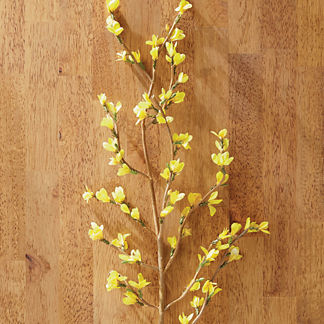 Forsythia Branches, Set of Six