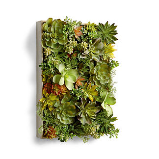 Outdoor Succulents in Wooden Box