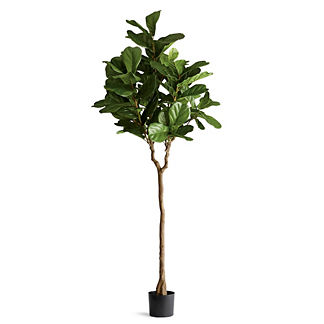 Outdoor Fiddle Leaf 7' Tree