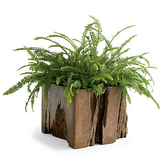Bryce Root Indoor/Outdoor Planter