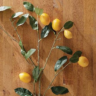 Lemon Branch Stem