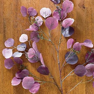Purple Eucalyptus 42