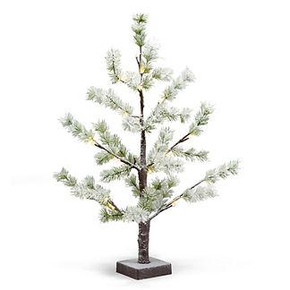 Snow Pine 23